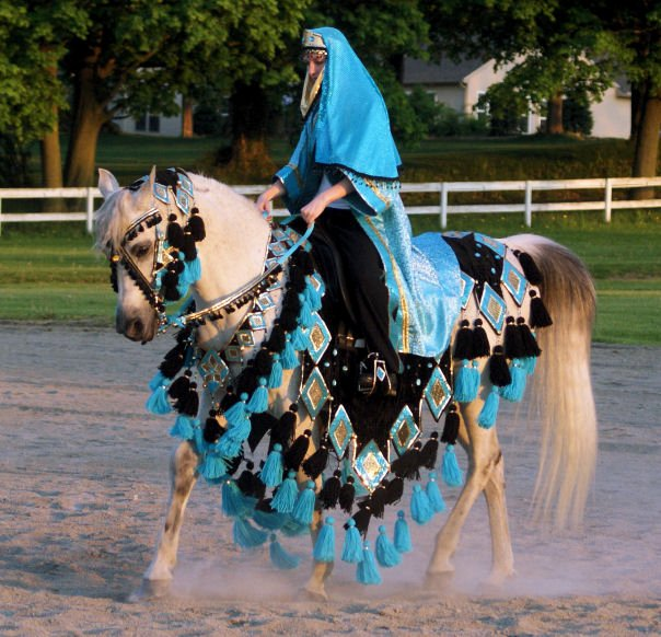 Arabian costume on Pinterest | Arabian Horse Costume ...